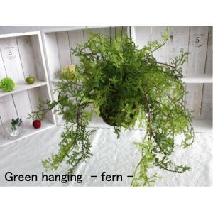 ミニ観葉植物 グリーンハンギング・ファーン (...の詳細画像2