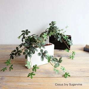 シサスプラント シュガーバイン オシャレな長方形タイプ 石:ブラウン  可愛い葉っぱで優しく消臭する観葉植物!消臭触媒加工 造花 インテリア|e-mintcafe
