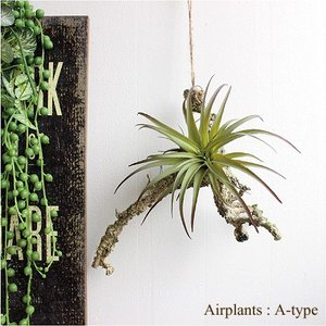 フェイクグリーン エアプランツハンギング A-type ティランジア 観葉植物 造花 インテリア CT触媒|e-mintcafe