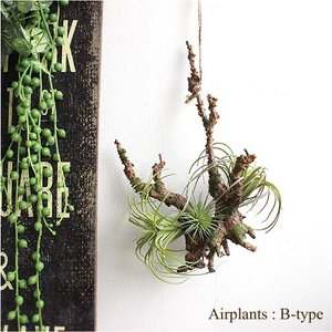 エアプランツハンギング B-type ティランジア 造花 インテリア CT触媒 リアル おしゃれ 吊り下げ 葉っぱ|e-mintcafe