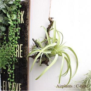 エアプランツハンギング C-type ティランジア 観葉植物 造花 インテリア CT触媒 リアル おしゃれ 吊り下げ 葉っぱ|e-mintcafe