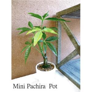 ミニパキラポット 3593 造花 観葉植物 ミニ 光触媒 CT触媒 e-mintcafe