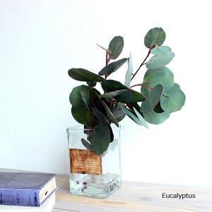 マジカルウォーターアレンジ ユーカリ 38cm eucalyptus 造花 小型 アレンジ インテリア CT触媒 送料無料 (北海道 沖縄 離島 有料)|e-mintcafe