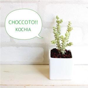 ミニ コキアポット 造花 観葉植物 光触媒 CT触媒 インテリア フェイクグリーン|e-mintcafe