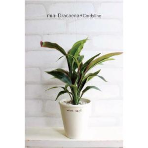 ミニドラセナ コーディライン 28cm  造花 インテリア ミニ人工観葉植物 CT触媒 フェイクグリーン e-mintcafe