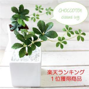 観葉植物 ミニシサスアイビープラント シュガーバイン 造花 ...
