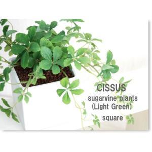 観葉植物 ライトグリーン L.シサスアイビー 造花 フェイクグリーン|e-mintcafe