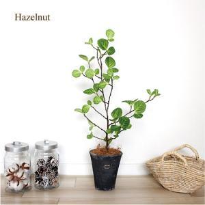 ヘーゼルナッツ セイヨウハシバミ H60   観葉植物 造花 インテリア CT触媒 e-mintcafe