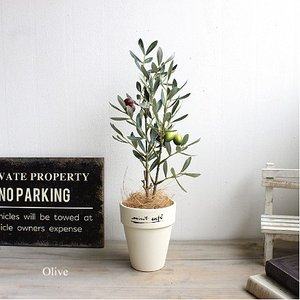 オリーブ 40cm 造花 インテリア 人工観葉植物 消臭 CT触媒 e-mintcafe