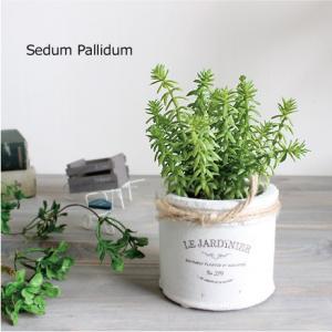 多肉植物 セダム パリダム 15cm テラコッタ 造花 インテリア CT触媒 フェイクグリーン|e-mintcafe