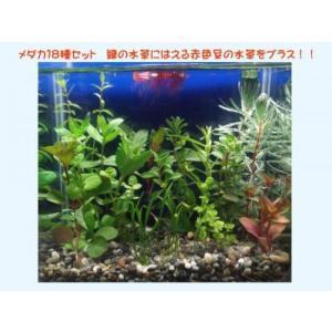 (水草)無農薬 メダカやテトラ向け小型水槽18種 簡単育成水草セット(赤色豊富タイプ)