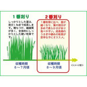 [三晃商会]チモシー牧草(二番刈り)・北海道ソフトチモシー 約600g e-petyasan 02