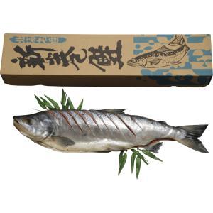 新巻鮭姿切れ目入り お歳暮 送料無料(北海道・沖縄・離島は除く)|e-prom
