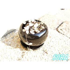 ハートカズラ(ホワイト) 鉢植え|e-sora