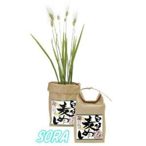 麦めし栽培セット|e-sora