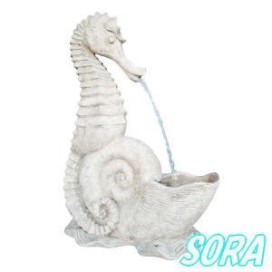タツノオトシゴの放水|e-sora