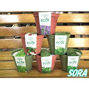 エコットS 全種(6種)セット|e-sora