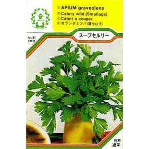 スープセルリー/ハーブ・西洋野菜の種 【ネコポス(メール便)可】 e-tisanes