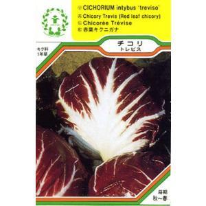 チコリ・トレビス/ハーブ・西洋野菜の種【ネコポス(メール便)可】|e-tisanes