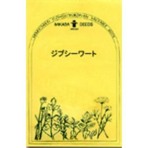 ジプシーワート/ハーブの種 【ネコポス(メール便)可】 e-tisanes