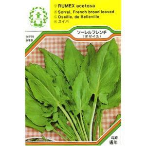 ソーレル フレンチ (オゼイユ)/西洋野菜の種 【ネコポス(メール便)可】 e-tisanes