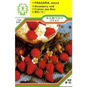ストロベリー ワイルド/ハーブ・西洋野菜の種 【ネコポス(メール便)可】 e-tisanes