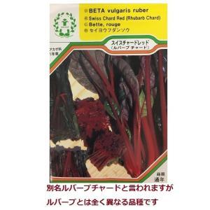 スイス チャード レッド (ルバーブ チャード)/西洋野菜の種 【ネコポス(メール便)可】 e-tisanes