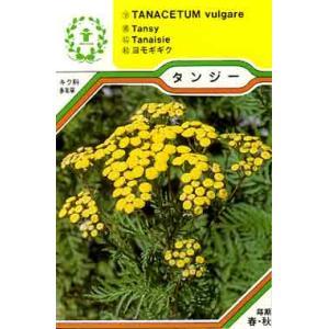■特徴 樹高・草丈:100cm 葉は緑色で鳥の羽根のような形をしています。草丈は120cm位で、黄色...