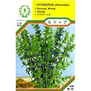ヒソップ/ハーブ・西洋野菜の種【ネコポス(メール便)可】・|e-tisanes