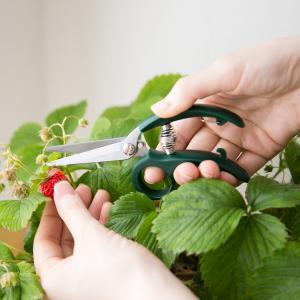 剪定はさみ 剪定ハサミ 園芸ハサミ ガーデニング 園芸用品 Leaves 手のひらサイズのミニハサミ