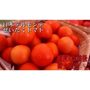 樹上完熟長野県産トマト【日本デルモンテのぜいたくトマト】2kg|e1093net