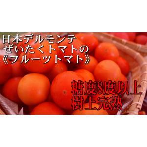 樹上完熟長野県産トマト【特選フルーツトマト】2kg|e1093net