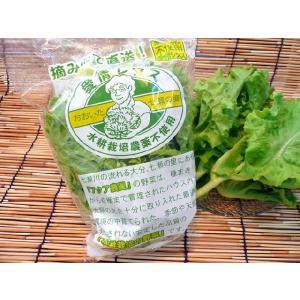 大分産 バタピアレタス[1袋]無農薬水耕栽培の葉レタス|e298com