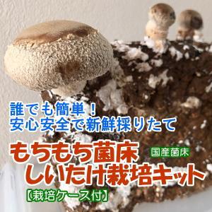 しいたけ栽培キット もちもち菌床椎茸 【栽培ケース付】 ご家庭で椎茸栽培 誰でも簡単 安心安全で新鮮 インドアファーム|ease-style