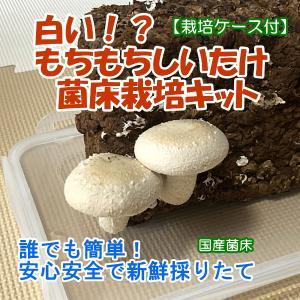 白いもちもちしいたけ菌床栽培キット【栽培ケース付】 ご家庭で椎茸栽培 誰でも簡単 インテリアにも インドアファーム|ease-style