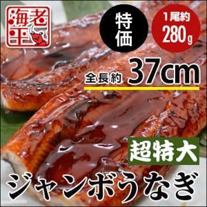 うなぎ蒲焼 徳用ジャンボ (超特大・有頭)約250g│ウナギ 鰻|ebihira55