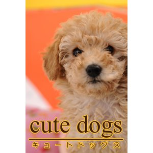 cute dogs02 トイプードル 電子書籍版 / 編集:アイロゴス|ebookjapan