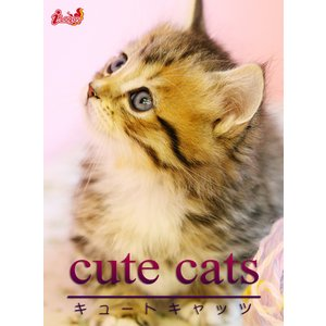cute cats05 マンチカン 電子書籍版 / 編集:アキバ書房|ebookjapan