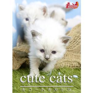 cute cats10 バーマン 電子書籍版 / 編集:アキバ書房|ebookjapan