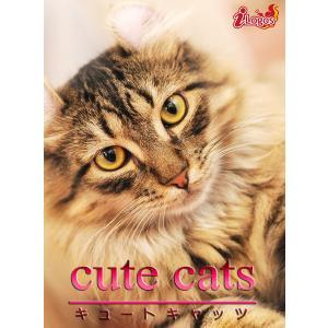 cute cats11 アメリカンカール 電子書籍版 / 編集:アキバ書房|ebookjapan