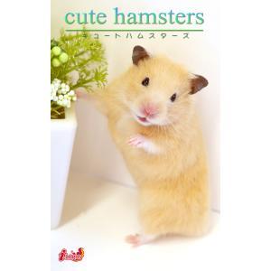 cute hamsters03 キンクマハムスター 電子書籍版 / 編集:アキバ書房|ebookjapan