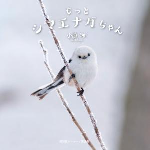 もっとシマエナガちゃん 電子書籍版 / 小原玲|ebookjapan