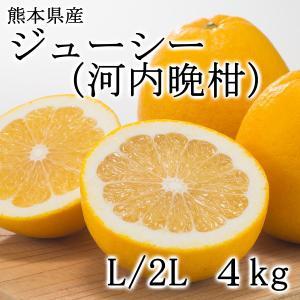 熊本県産 柑橘 ジューシー(河内晩柑)【約4kg・L/Mサイズ10〜12個入】 ec-kumakaren