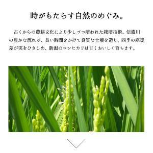 新米 5kg コシヒカリ お米 新潟県産こしひ...の詳細画像3