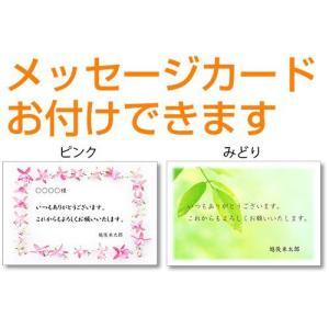 29年 新潟産 こしいぶき 真空パック 5kg|echigo-komesho|03
