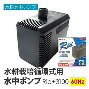水中ポンプ 水耕栽培 循環式用 Rio+3100 60Hz|eco-guerrilla