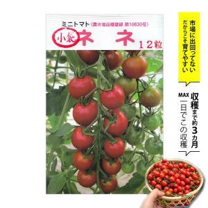 種 ミニトマト ネネ