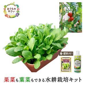 家庭菜園プランター栽培セット(種・肥料付) 水耕栽培 養液栽培