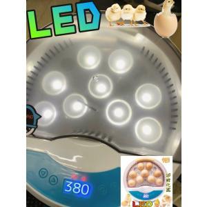 インキュベーター 検卵ライト内蔵鳥類専用ふ卵器 孵化器 9個入卵OK ヒヨコ生まれ 子供教育用 家庭用 詳しい日本語説明書付き新品|ecofuture