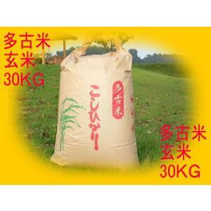 多古米  新米 正真正銘のコシヒカリ  玄米 30キログラム|ecofuture